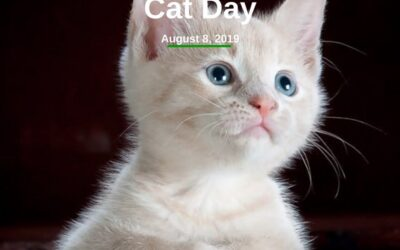 Celebrate International Cat Day