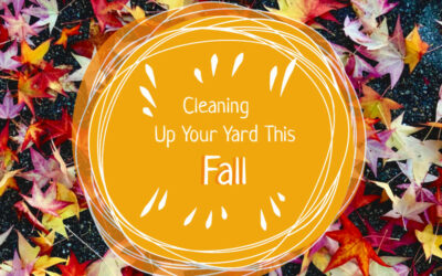Cleaning Up Your Yard This Fall